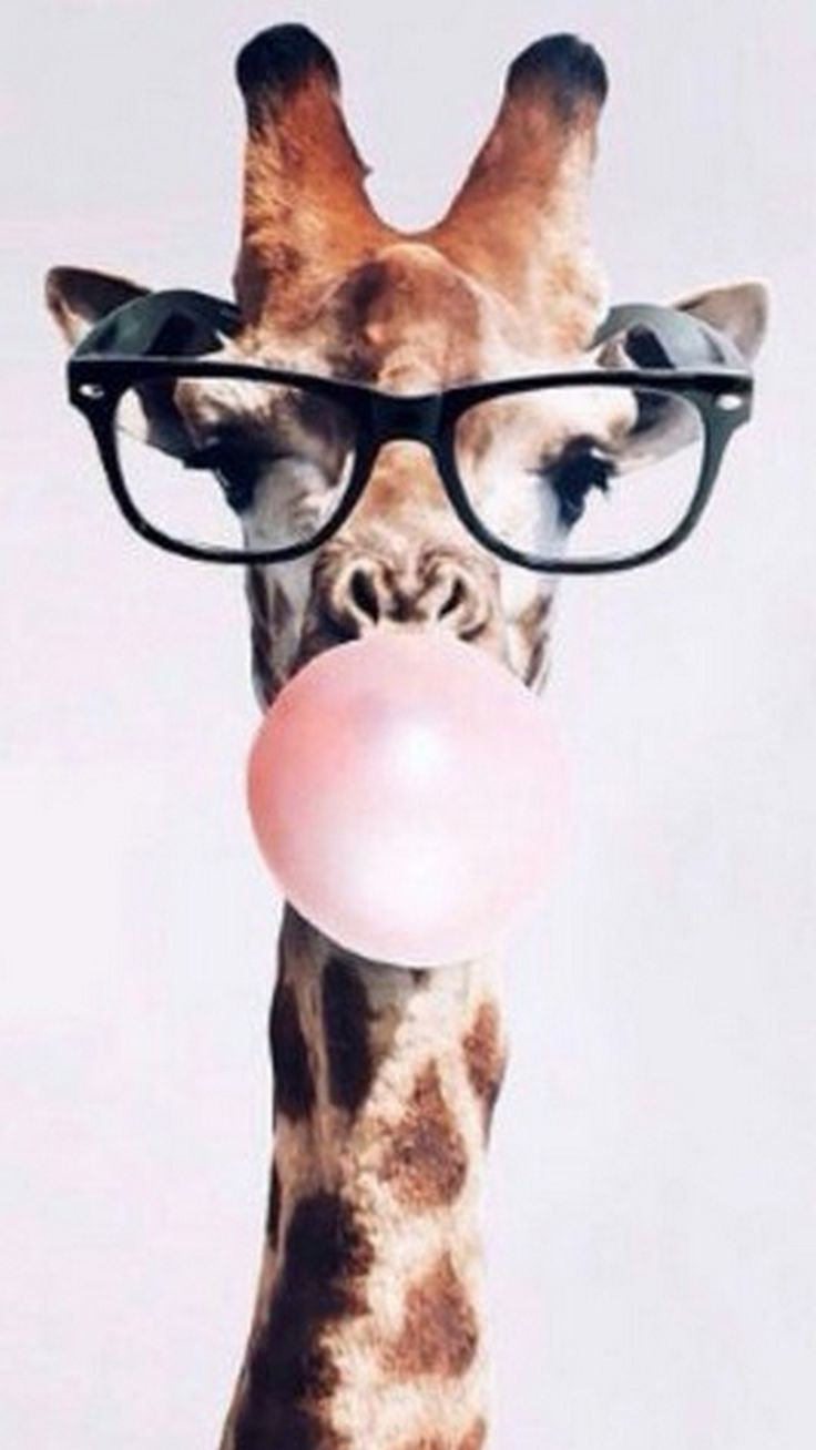 Cute Giraffe iPhone 7 Wallpaper