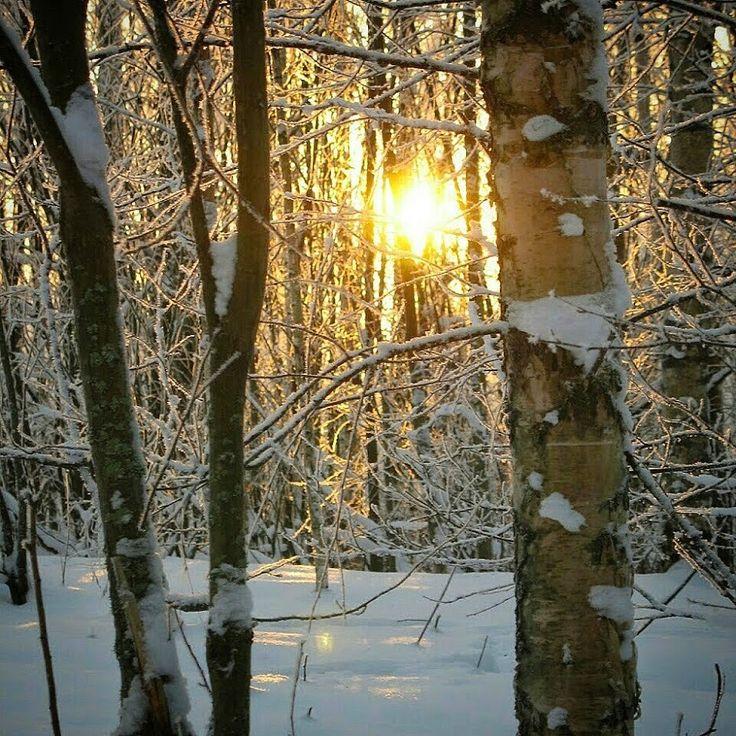 Anne Kimiläinen: More light at last...