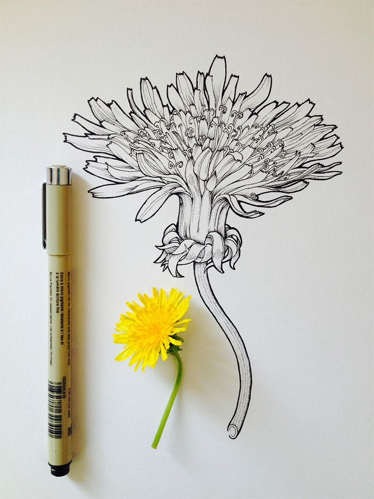 Flowers in Progress: Scientific Illustrator Taunts Us with Spring http://www.thisiscolossal.com/2014/02/flowers-in-progress-scientific-illustrator-taunts-us-with-spring/