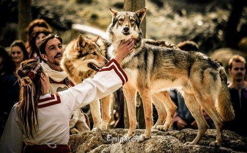 puy du fou vikings A Cybelle, les premiers loups dressés par le jeune Gontrand