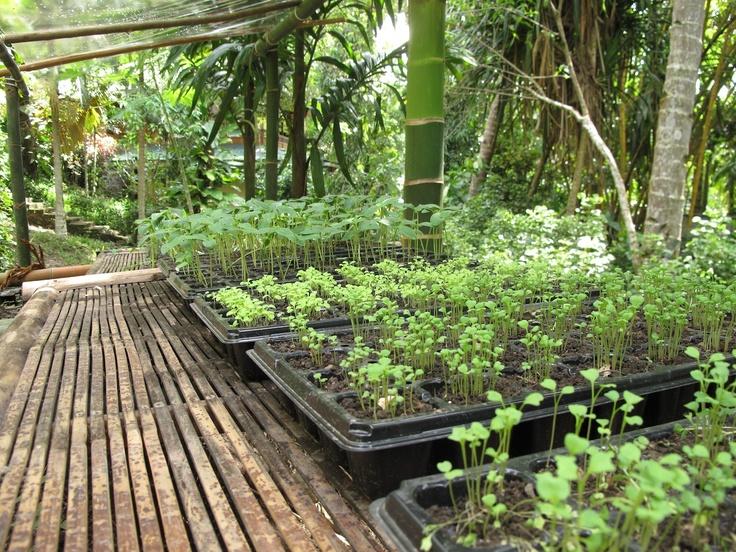 New herb garden