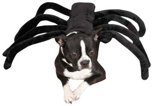 Zack & Zoey GRR-ANTULA Dog Pet Halloween Costume CLEARANCE! #ZackZoey