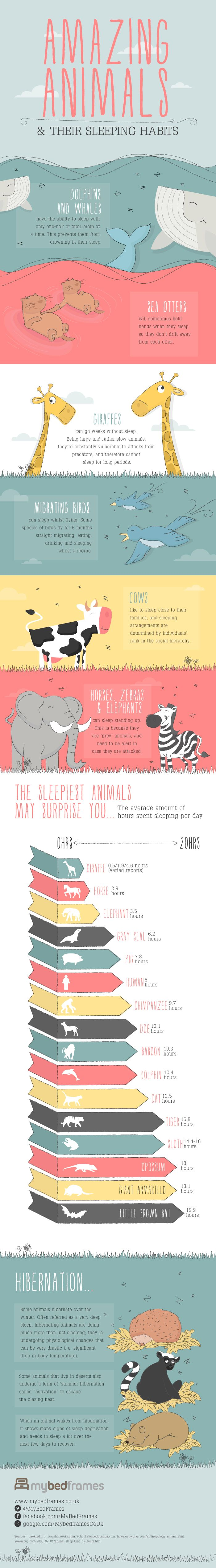 Cute Infographic Reveals The Surprising Facts About How #Animals #Sleep At Night - love this! As if cats only sleep for 12.5 hours!