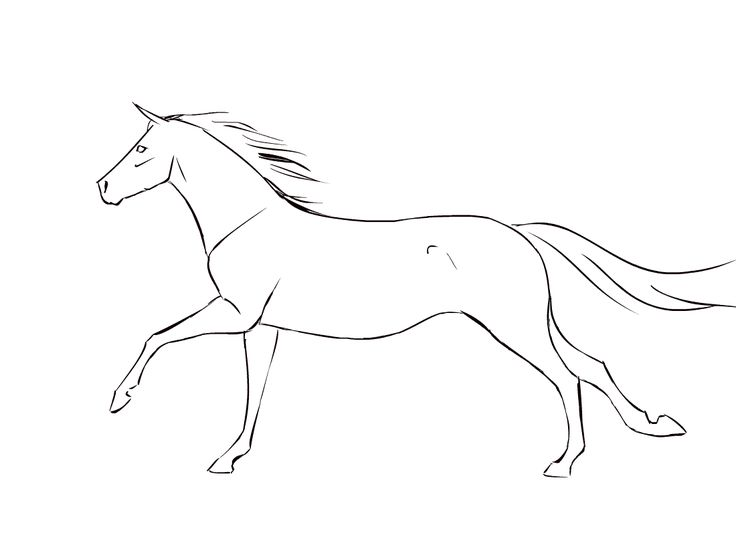 Horse Gallop Animation Cycle by vyxe
