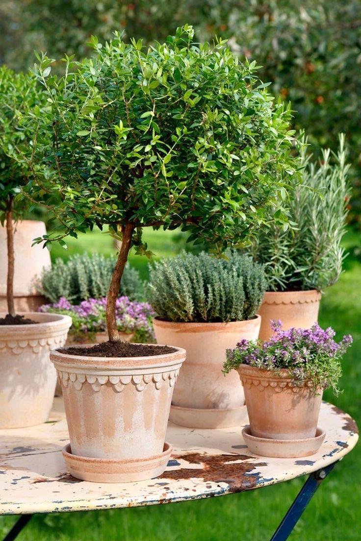 collection of terracotta pots   adamchristopherde...