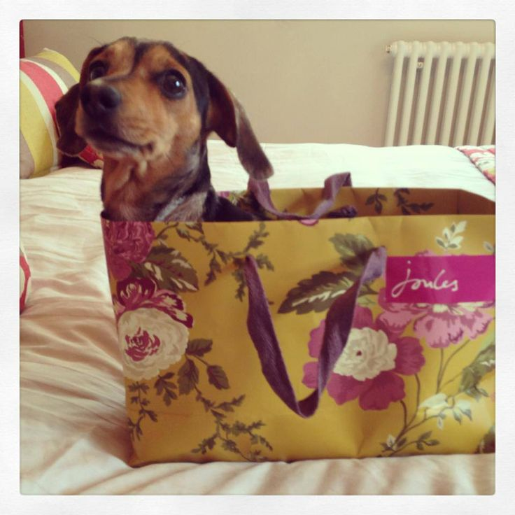 Stowaway dog found in #Joules bag!