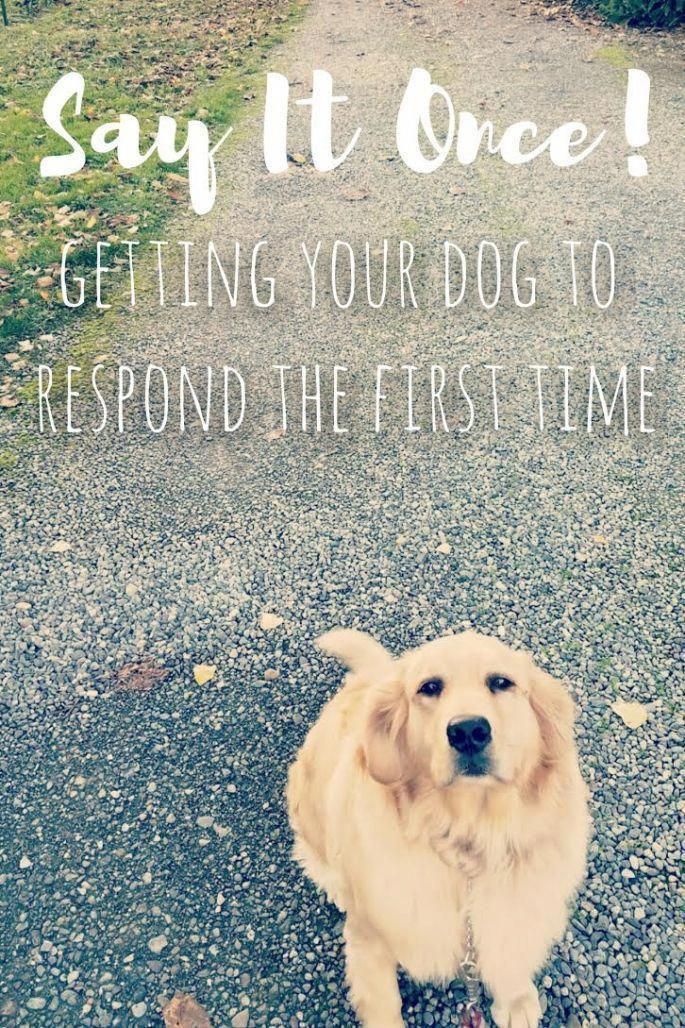 Command For Dog Training Leave Those Days From The Bad Dog