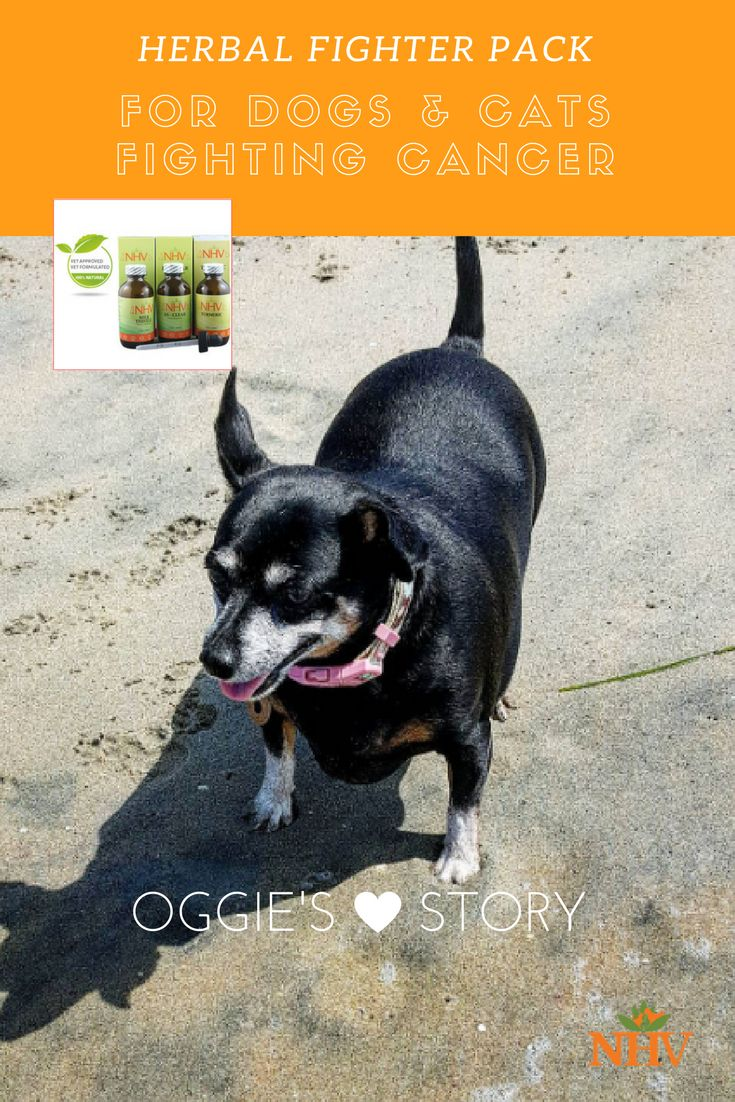 Cancer herbs for dogs - 13 Year Old Adorable Dog Oggie S Tumor Tale