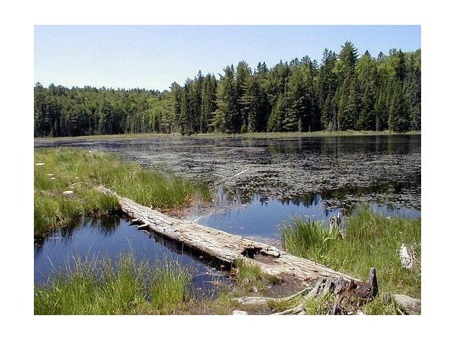 Beaver Pond Trail, Algonquin Provincial Park