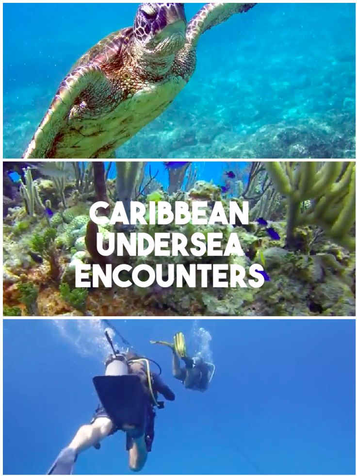 Swim, snorkel or SCUBA with the marine animals off the shores of Florida and Mexico, plus all around the Caribbean.