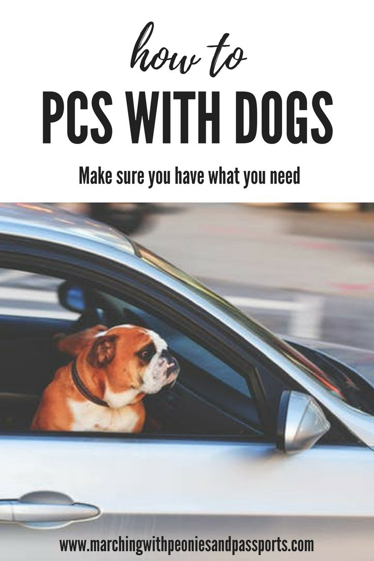 Moving with pets can be stressful but it can me so much easier with these six essentials! Moving with dogs/ pets/ PCSing/ PCSing with Pets/ flying with pets/ Army wife/ PCSing tips/ military movies/ moving with the military/ OCONUS PCS/ moving abroad /moving overseas/ dog essentials/ pet safety/ fur children/