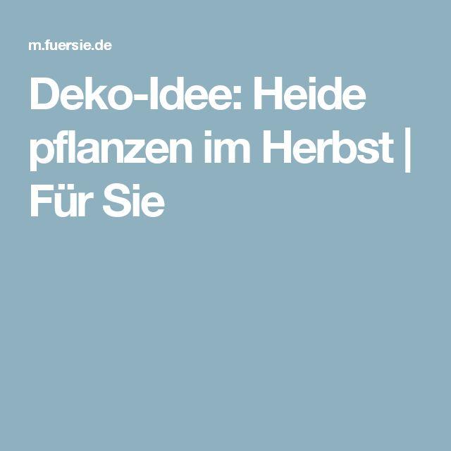 Deko-Idee: Heide pflanzen im Herbst   Für Sie