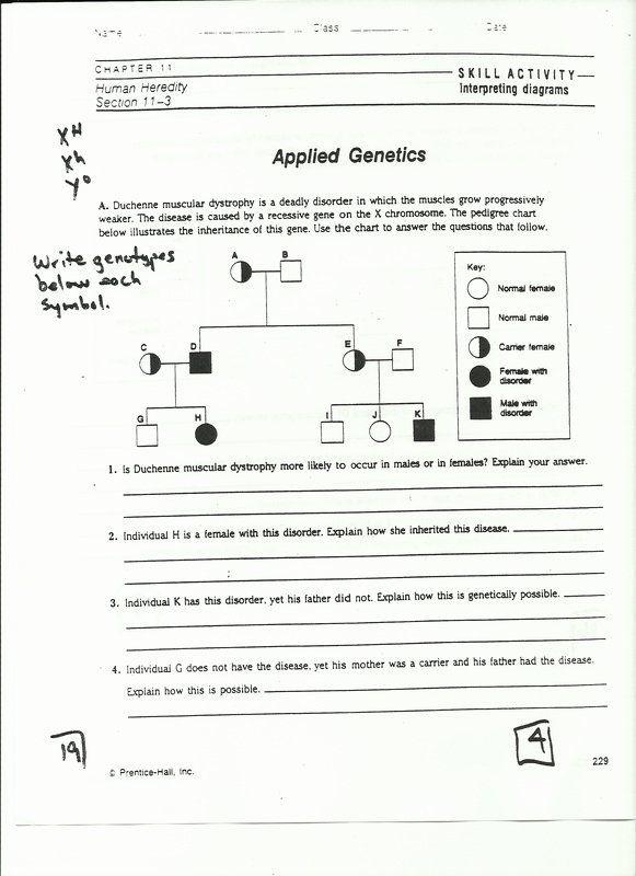 Analyzing Pedigrees Worksheet Answers Elegant Part3 ...