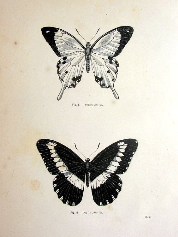 Butterfly engraving black