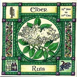 Neo-Druidism - Elder, ogham name Ruis, rules 25th November to 22nd December. Elder is called the poor mans medicine chest because of the myriad medicinal and healing properties of all parts of the tree. The flowers make a light refreshing cordial, and the berries a rich red wine, also a soothing cough remedy.