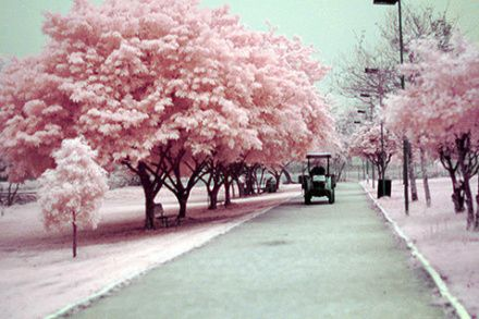 lane trees