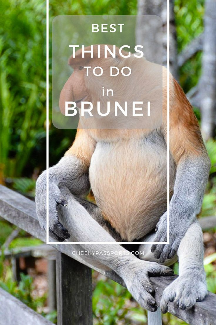 Things to do in Brunei - Things to do in Brunei - The little Sultanate of Brunei is seldom considered as a travel destination because, quite frankly, there aren't a whole lot of things to do in Brunei. We gladly discovered that although there is no need to spend much time in the country, there were enough activities to keep us occupied for a couple of days. #brunei #budgettravel #touristattractions