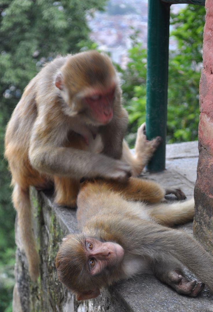 Katmandhu