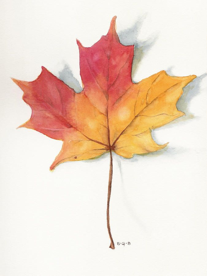 Maple leaf watercolor. Beautiful!
