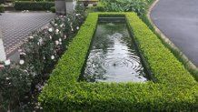 Formal Pond, Buxus microphylla 'Japonica'