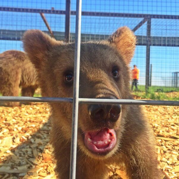 Thirteen rescued bears have a new, beautiful life.