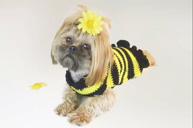 12 Crochet Dog Sweater Patterns For Your Fur Babies | Cream