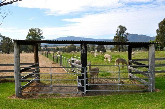 Starline Alpacas Farmstay Resort Hunter Valley NSW Australia