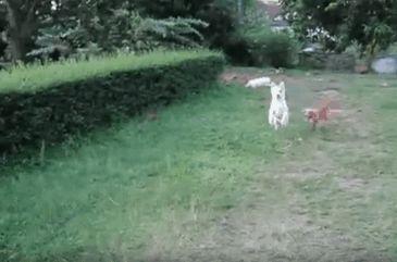 GIF perro persiguiendo a otro