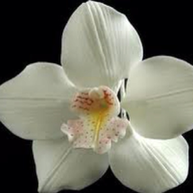 Cymbidium hair flower