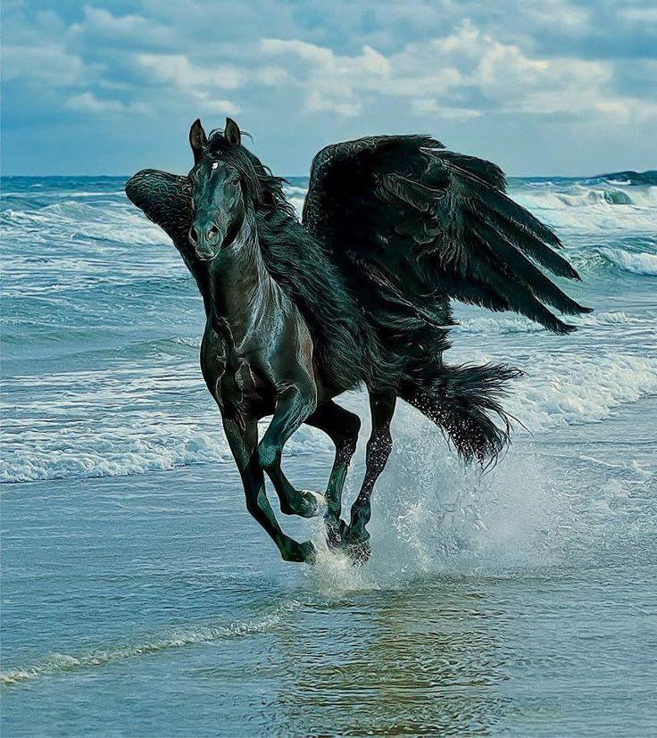 Casino moon horse