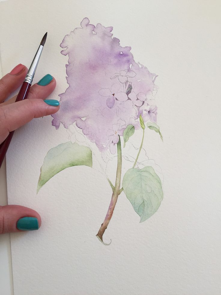 Lilac Botanical Illustration With Watercolor Watercolor Art