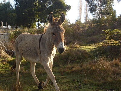 How to Care for a Donkey