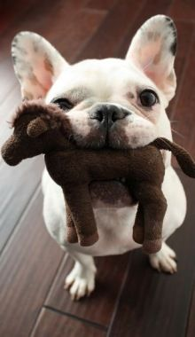 He has his pony...Does your dog have a favorite toy? ...........click here to find out more http://googydog.com
