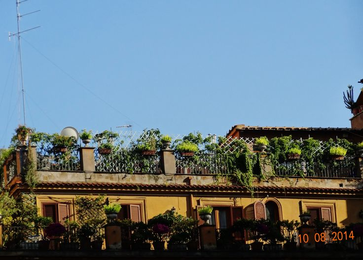 Rome, garden on the roof