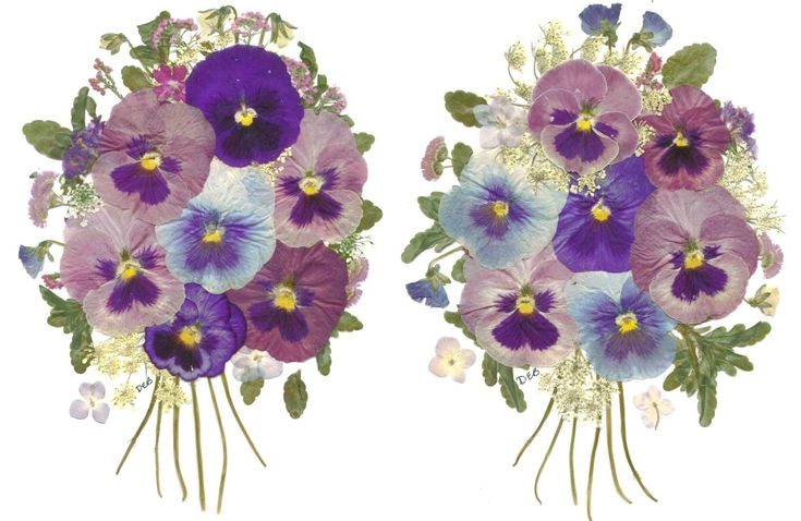 95 best pressed flowers images on pinterest dry flowers for Dried flowers for crafts