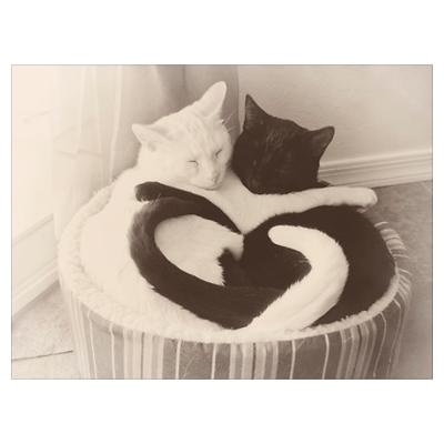 Love in Black & White by Admin_CP22479370
