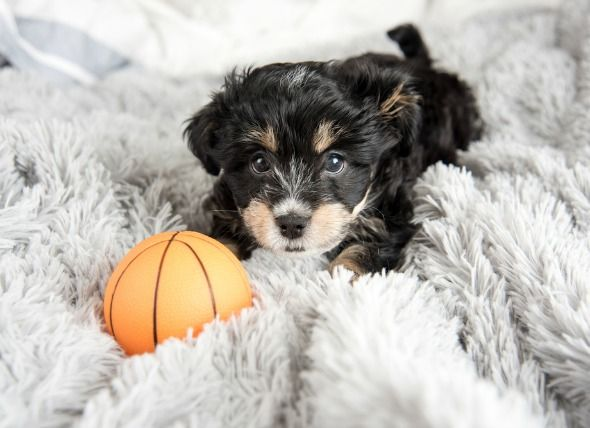 Surviving the First Night with Your Puppy | petMD