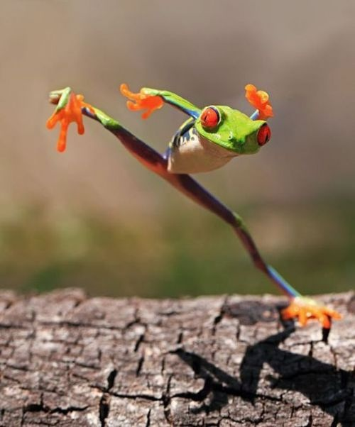 Kung fu froggie! Funny animal pictures. Cute frog.