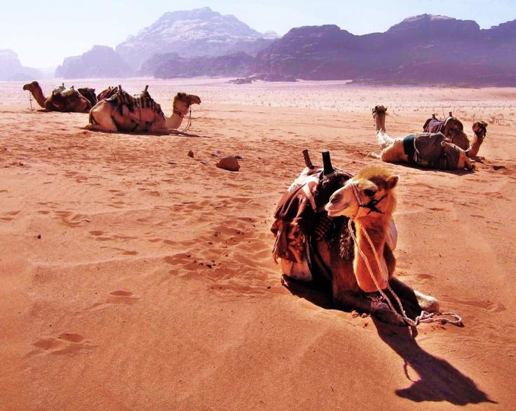 Jordanian desert   see more in Landscapes   LESS BLATHER, MORE BITE