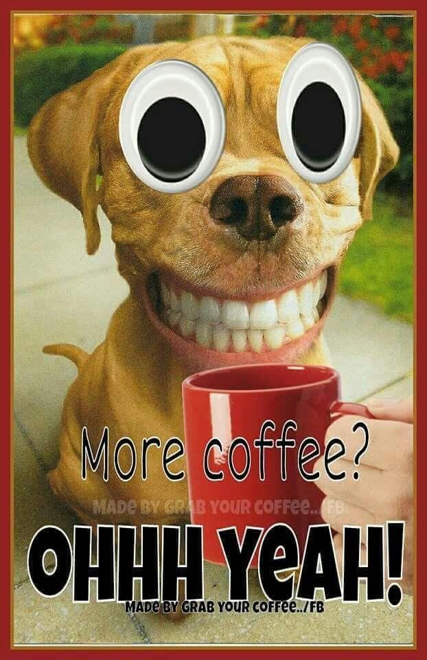 962 Best Coffee Humor Especially Starbucks Great Drinks