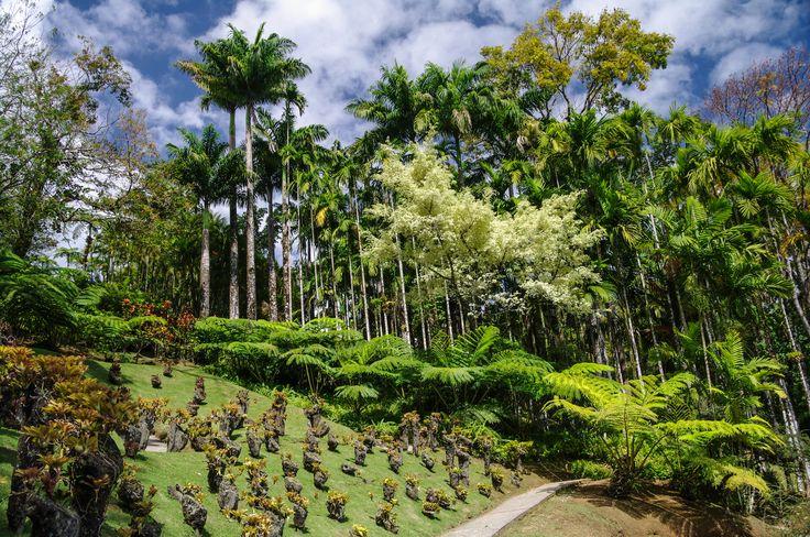 Les jardins de #Balata. #Martinique #Antilles #France