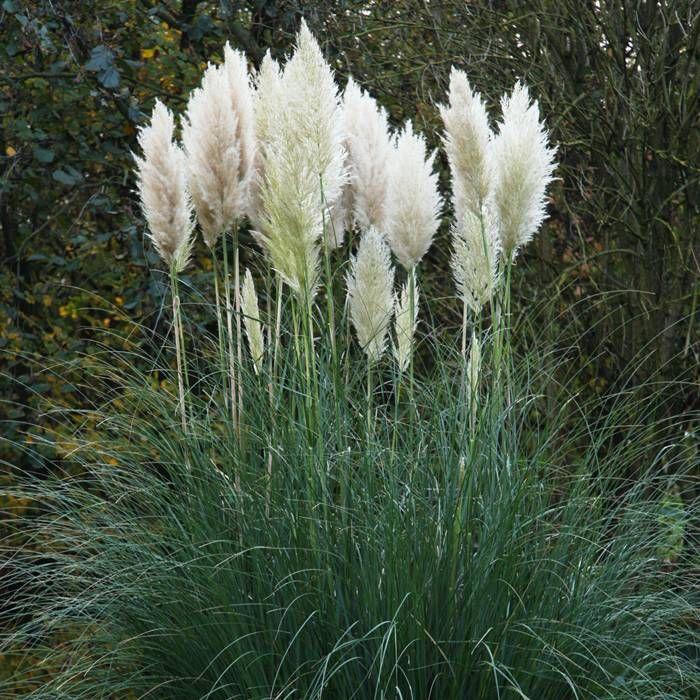 132 best tuinieren grassen images on pinterest garden grass gardening and garden plants. Black Bedroom Furniture Sets. Home Design Ideas
