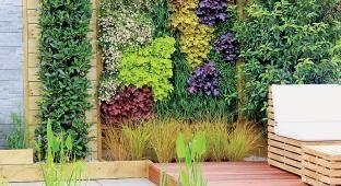 Ogród na ścianie: rośliny pnące #ogród #rosliny #pnącza