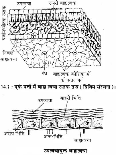 Ncert Solutions For Cbse 7th Science Chapter 11 Manual Guide