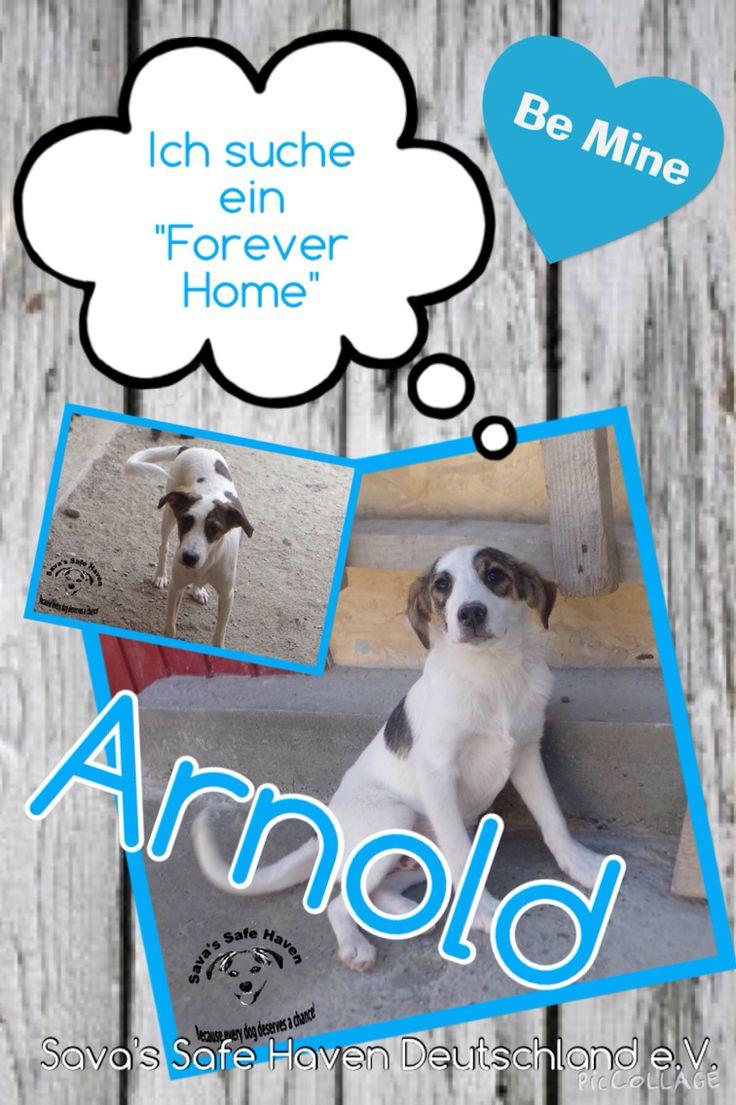 Arnold  ist ein 10 Monate alter wunderschöner Hund. Er ist sehr freundlich und lieb und versteht sich mit Hunden und Katzen. Er ist nun in Sicherheit bei den Sava's. Wer möchte Arnold zeigen das eine eigene Familie und eigene Menschen noch toller sind als ein Platz im Shelter?  Wird ein Tier vermittelt, ist wieder Platz für ein weiteren Notfall von der Strasse.  Adoptionen von Strays rettet zwei Leben ❤️❤️❤️  Ein Teilen = eine Chance auf eine Familie  Alle Sava's Hunde sind vollständig…