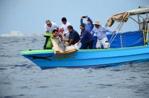 Cancun riviera maya swim with the Dolphins