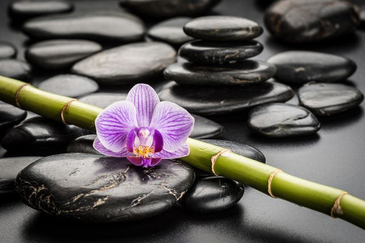 How well do you know the basics of Feng Shui? Take the quiz to find out. http://fengshuiyourhomenow.com/feng-shui-room-by-room/bathroom/can-you-answer-basic-feng-shui-questions/ #fengshui