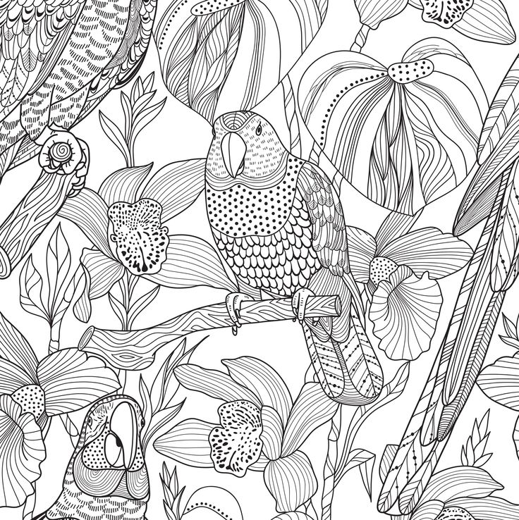 17 Images About Coloring Blank Pages On Pinterest Amy Blank Coloring Pages For Adults
