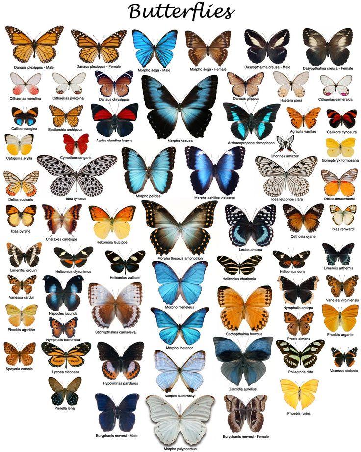 butterflies.jpg (1200×1500)
