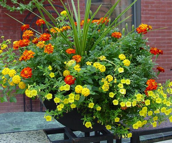324 best images about garden container on pinterest Plants that love sun and heat